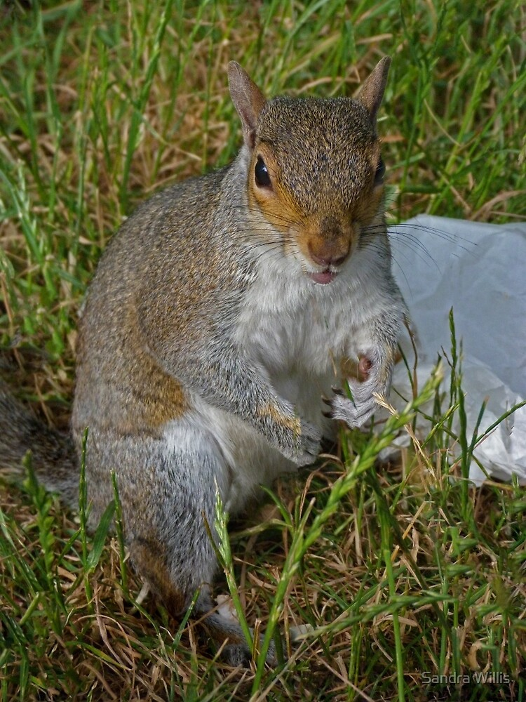 Abuse from a squirrel by Sandra Willis
