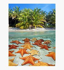 Beach with palm trees and starfish underwater Photographic Print