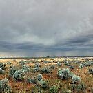 Salt Bush Storm by annofsilhouette