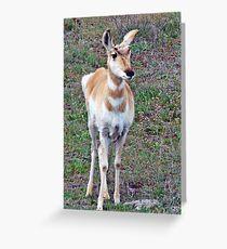 antelope yearling #137 Greeting Card
