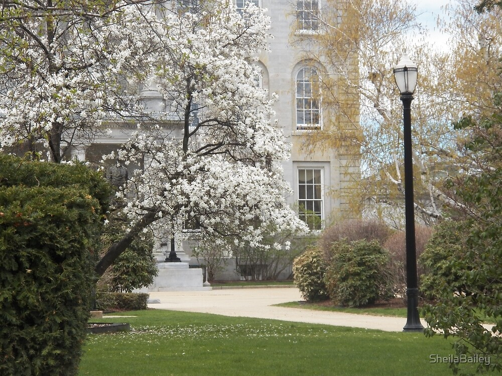 Statehouse Lawn in Spring by SheilaBailey