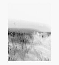 shrouded vineyard.... foggy morning Photographic Print
