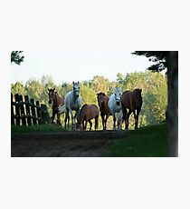 Even Horses Don't Have Great Mornings Photographic Print