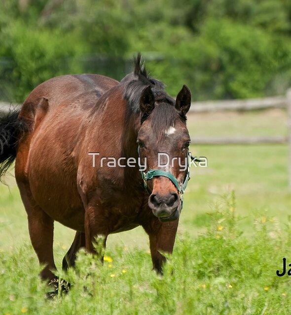 Jack - NNEP Ottawa, ON by Tracey  Dryka