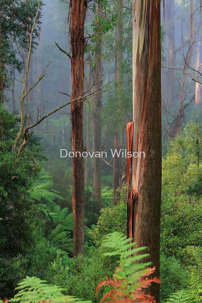 Cumberland Valley by Donovan Wilson