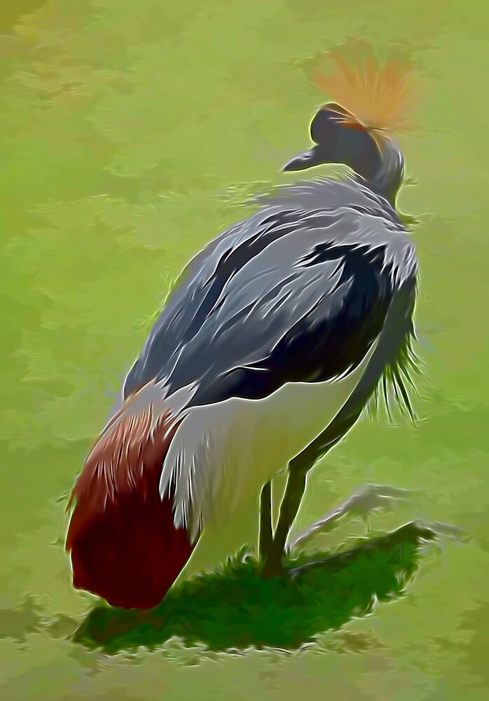 African Crowned Crane by photosbypamela