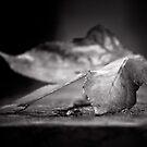 Fallen by Christine Wilson