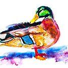 Duck Watercolor 1 by Beau Singer