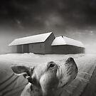 .dreams I. by Michał Giedrojć