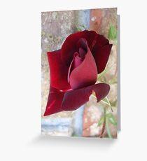 Ed's Rose Greeting Card