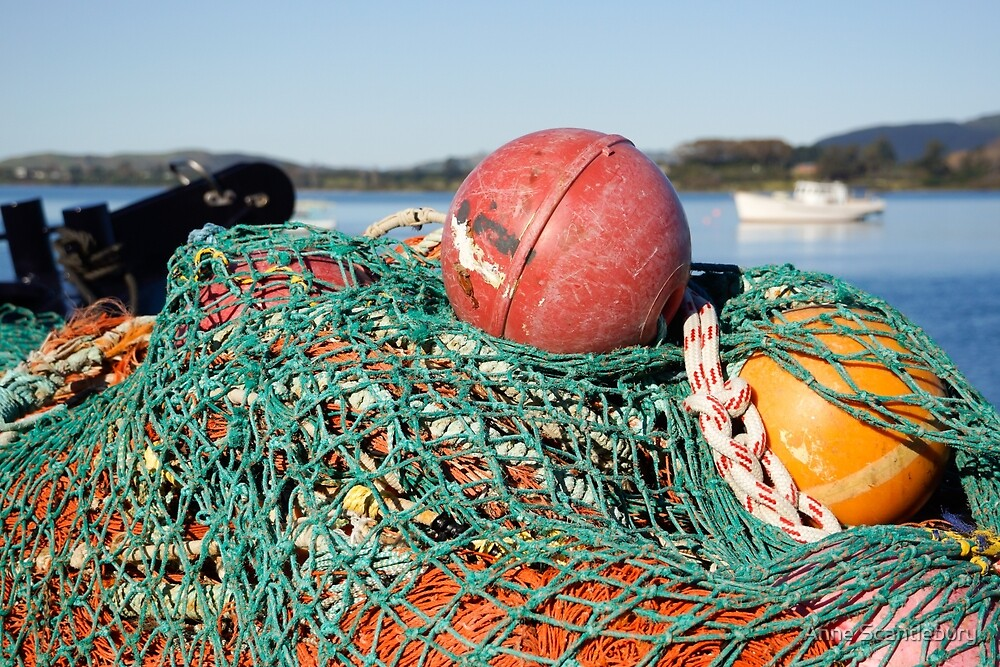 fishing net and floats by Anne Scantlebury