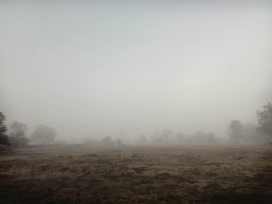 fog in my backyard by Albert