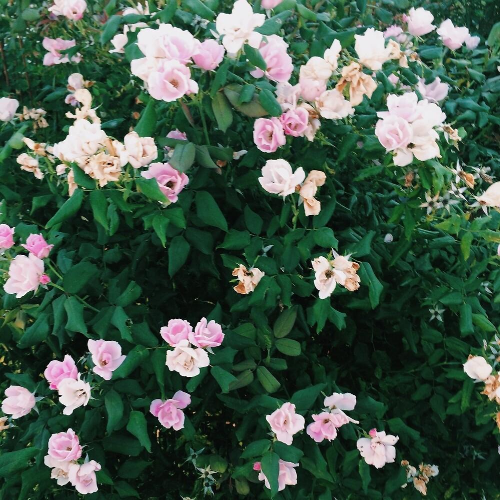 Flowers by alliezlatkin
