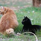 Orange Tabby Cat and Black Cat by DebbieCHayes