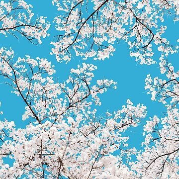 White Blossom #digitalart #floral #illustration de 83oranges