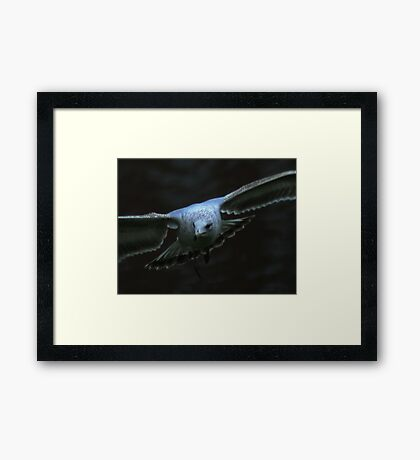 The Eyes of a Seagull Framed Print