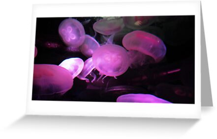 Moon Jellies by Tama Blough