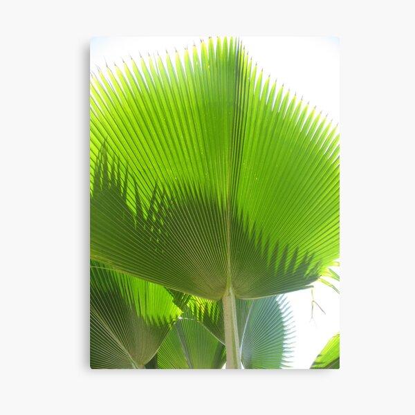 Giant Green Hawaiian Fan Palm Canvas Print