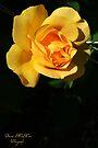 Rose by Briana McNair