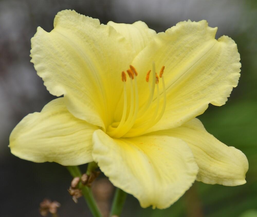 Flower by Adam  Johnson