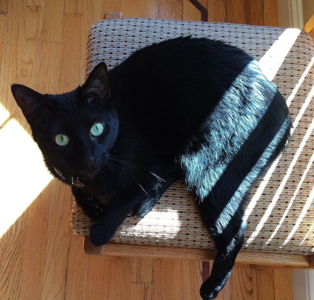 Cleopatra in her Sunny Spot by Rebecca Sayed