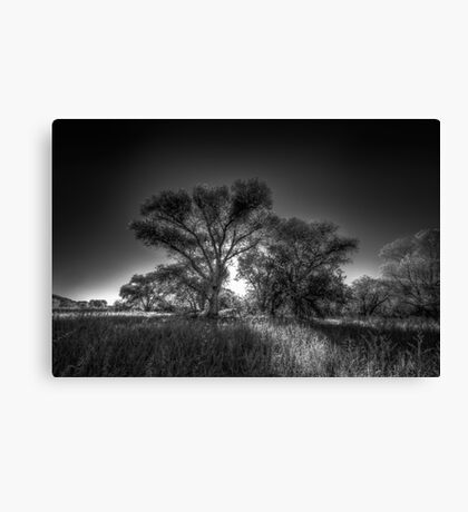 The Darkside of Trees Canvas Print