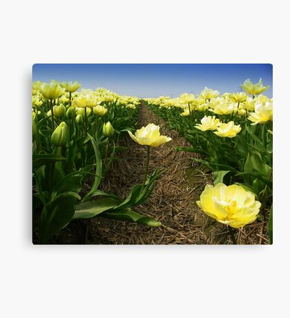 Tulips - One Step Out  Canvas Print