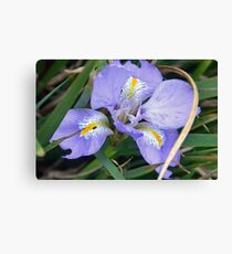 Iris wears her Blue Gown ...... Canvas Print