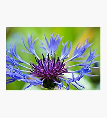 The Royal Crown Photographic Print