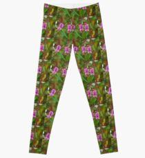 Wild Flowers Balsam  or The Beverley Sisters Leggings