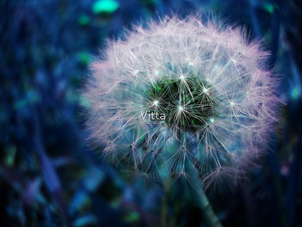 Dandelion. by Vitta