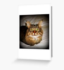 Inquisitive Insul - watchful & alert Greeting Card