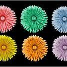 Variegated Dandelions by Sheri Nye