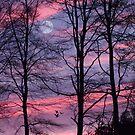 Sunset in the Forest by Ann Garrett