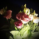 Lisianthus by SiouxRogers