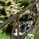 old iron gate by stream in Hawkshead by BronReid