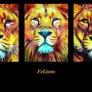 Felions by SiouxRogers