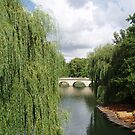 Take a punt in Cambridge by erwina