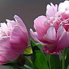 Pink in a Pair by Susan Blevins