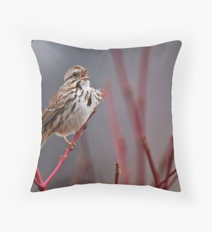 Song Sparrow on Dogwood - Ottawa, Ontario Throw Pillow