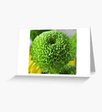 Mini Chrysanthemum  Greeting Card