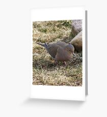 beauty dove Greeting Card
