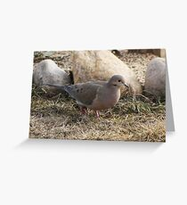 walking dove Greeting Card