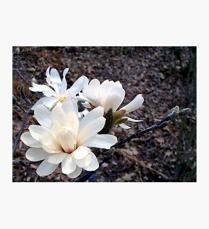 White Star 4 Photographic Print