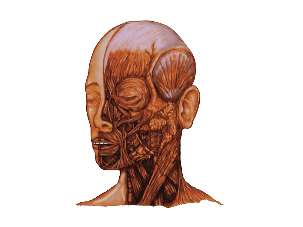 Anatomical Head and Neck dissection by BloodandBone
