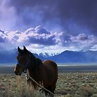 Faithful Horse by Jeanne  Nations