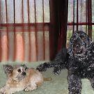 My Two Grandogs by Linda Miller Gesualdo