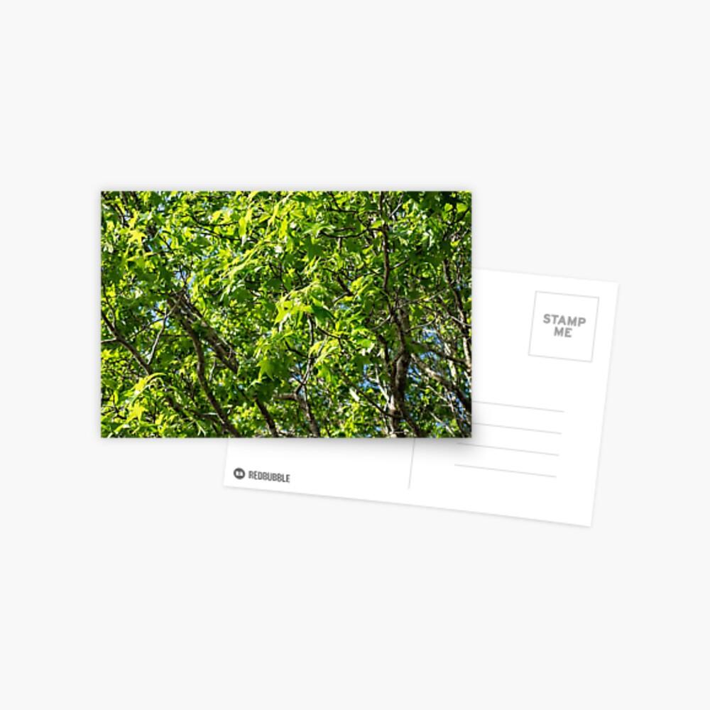 Bommy-Klopfer-Baum Postkarte
