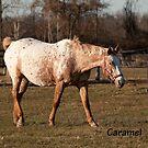 Caramel - NNEP Ottawa, ON by Tracey  Dryka