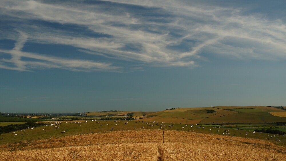 The Sheep Field by glynk